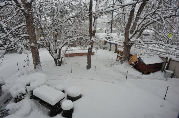 Garden Snow 01