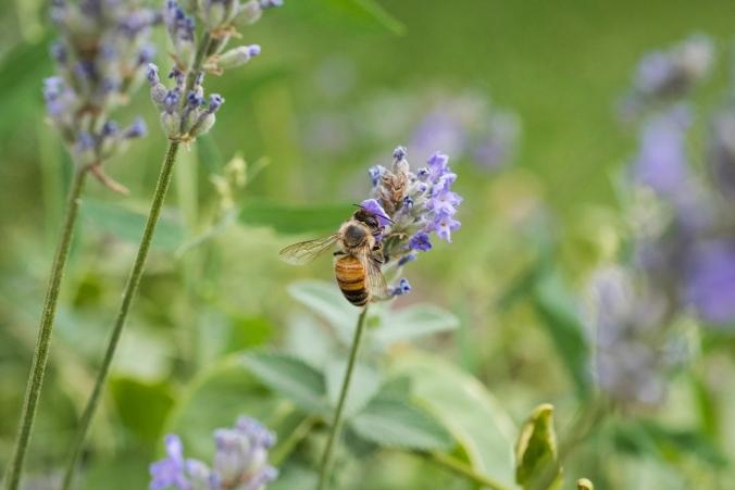 Bee 01.jpg