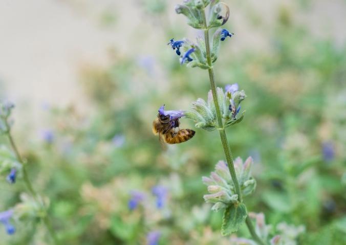 Bee 02.jpg