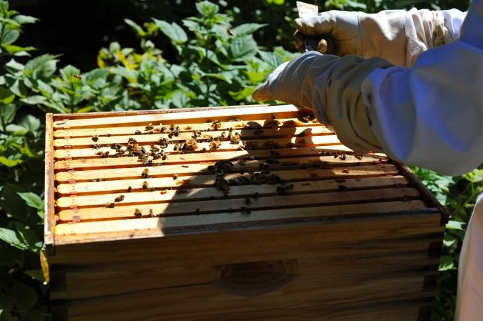 Hive 02
