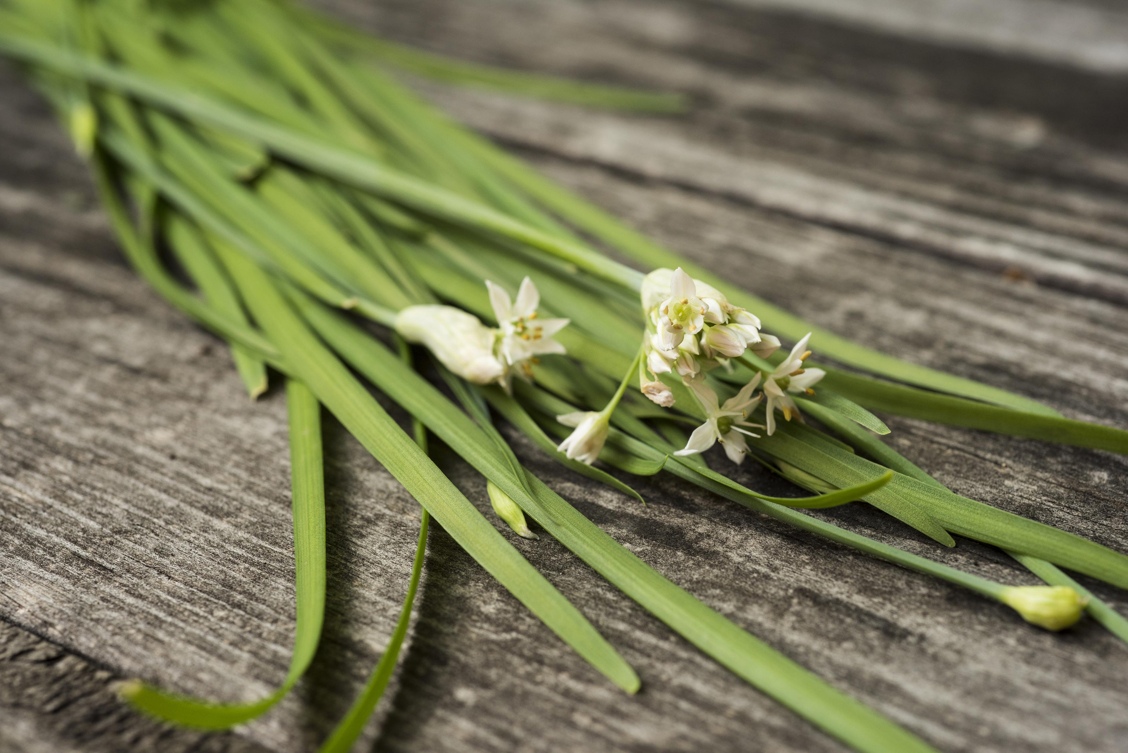 Garlic Chives.jpg