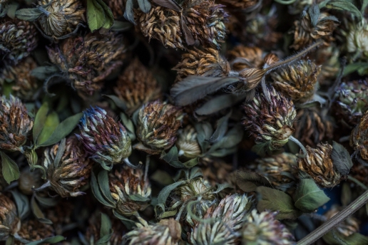 Red Clover Dried.jpg