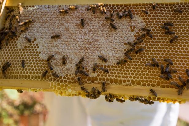 Frame Honeycomb.jpg