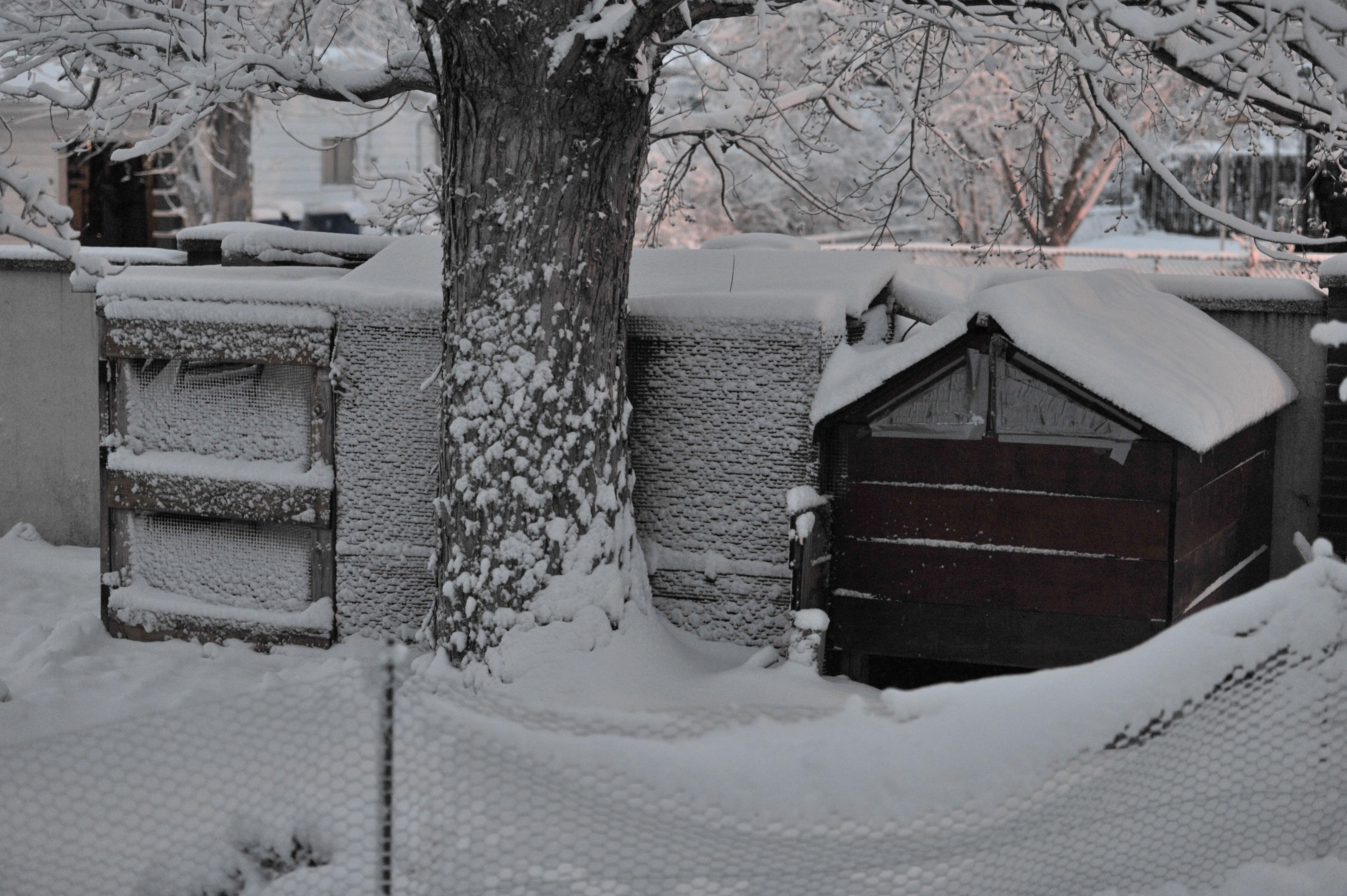Garden Snow 02