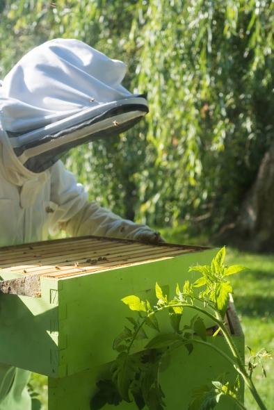 Hive Closing Up 02.jpg