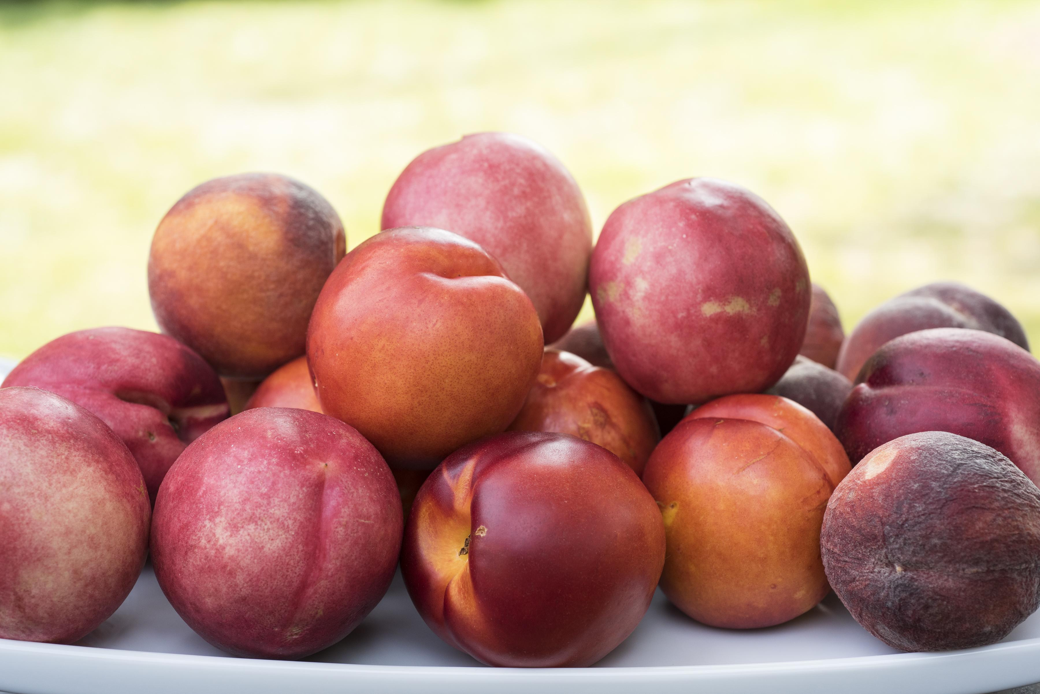 Peaches Garden.jpg