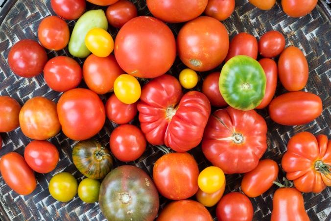 Tomatoes Tray 02.jpg