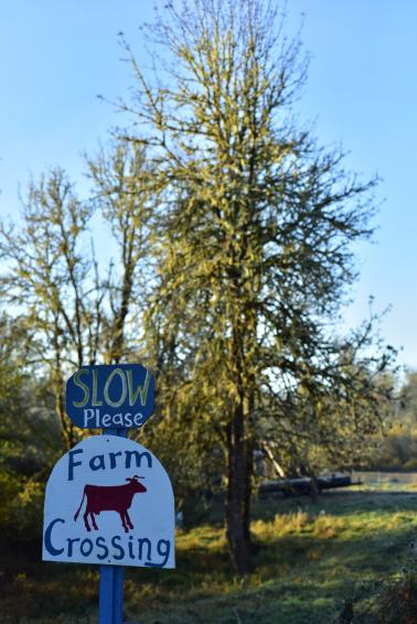 The Farm Series: Grassward Dairy | Finding Quiet Farm