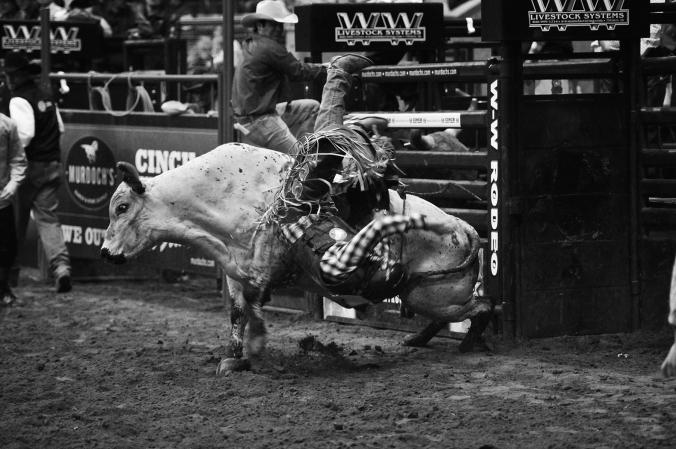 Bull rodeo sml