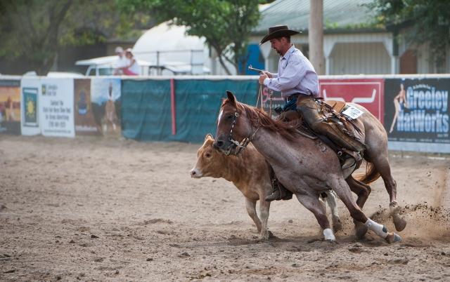 cowboy-cow-sml.jpg