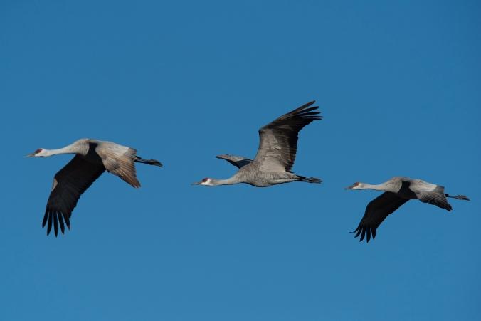 Cranes 01 sml