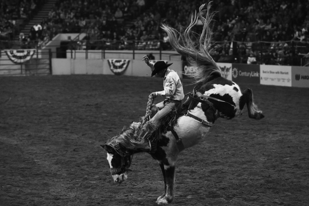 Horse rodeo sml