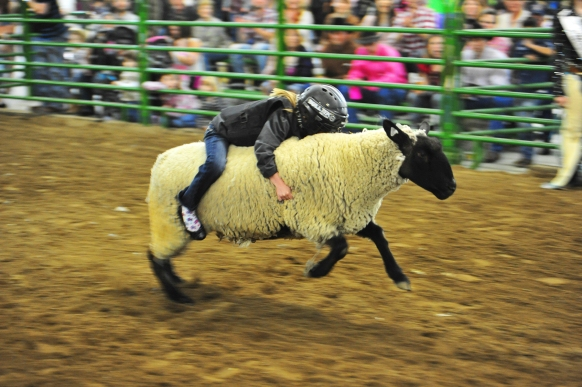 Mutton busting sml