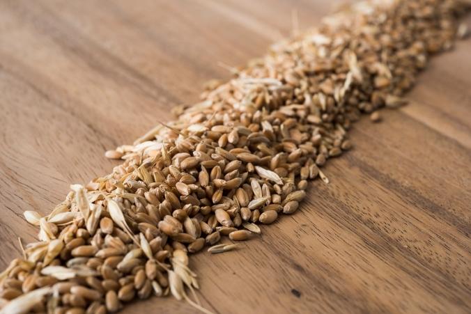 Seeds 03 sml