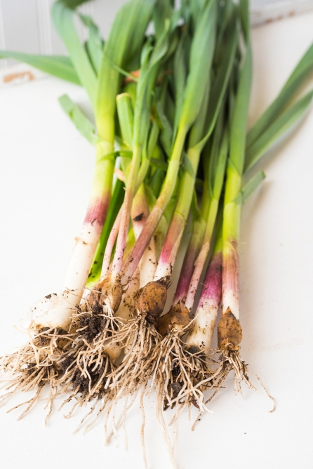 Vegetables Color 04 sml