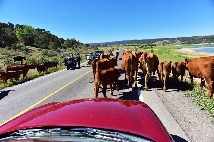 Cattle Drive 01 sml