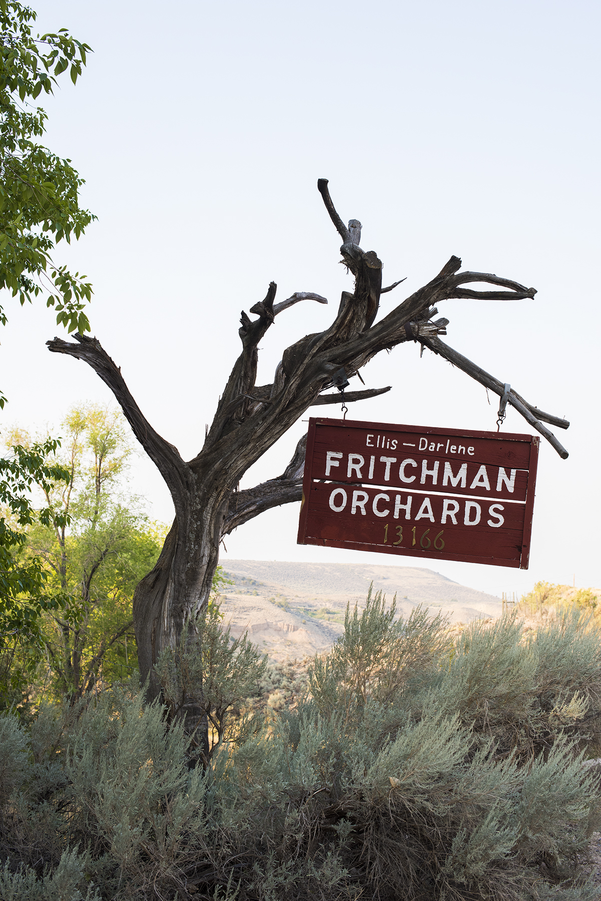 Fritchman 01 sml