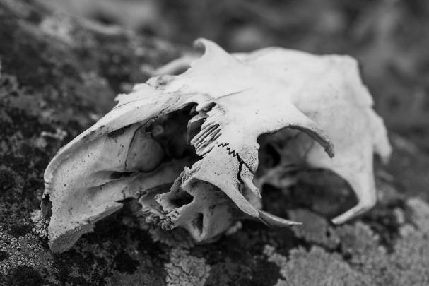 Bones 01 sml