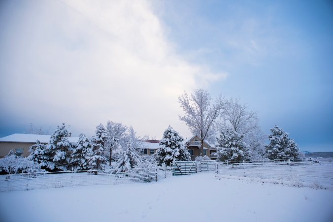 QF Snow 02 sml