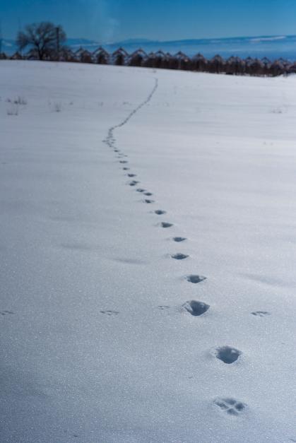 Snow Tracks 01 sml
