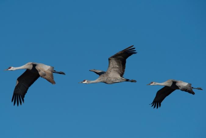 Cranes 03 sml