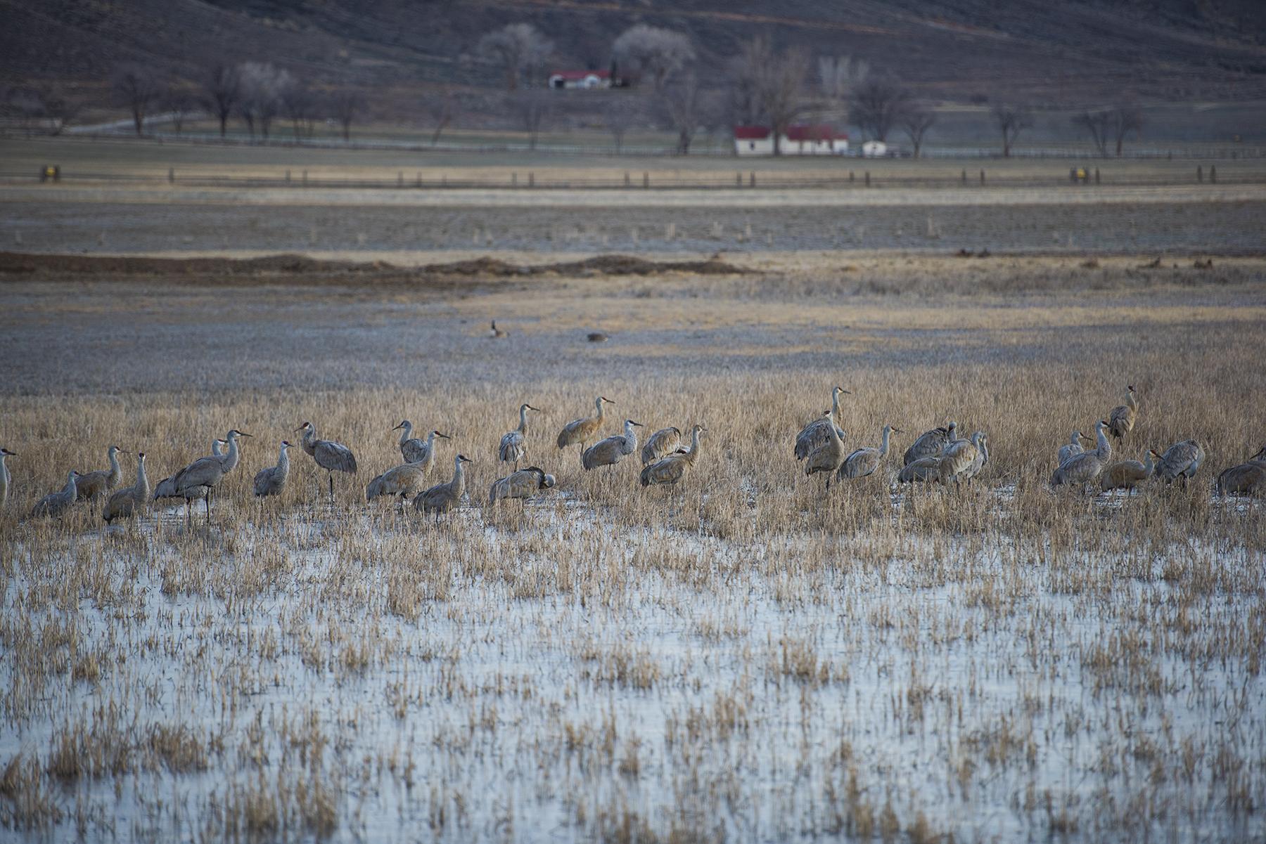 Cranes 04 sml