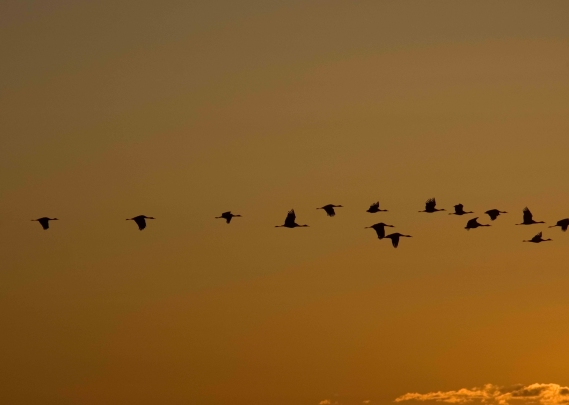 Cranes 07 sml