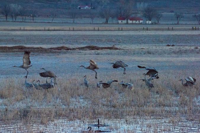 Cranes 09 sml