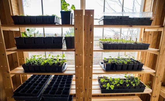 Seedlings 01 sml