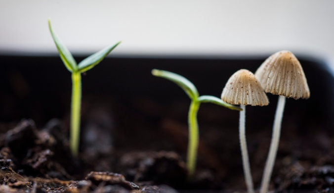 Seedlings Mushrooms 01 sml