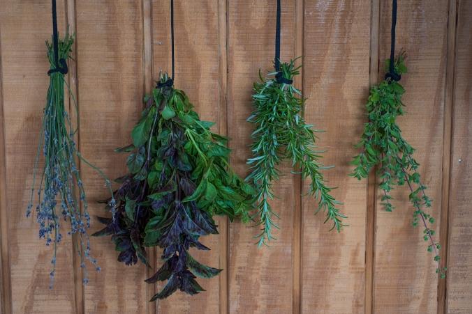 Herbs 01 sml