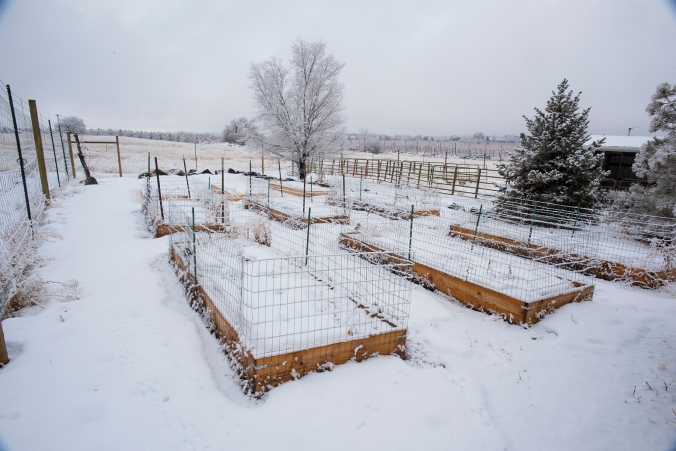 Raised Beds 02 sml