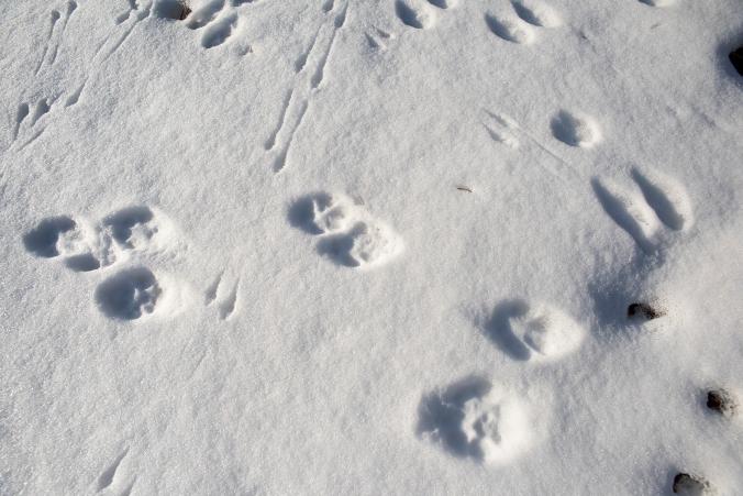 Snow Tracks 02 sml