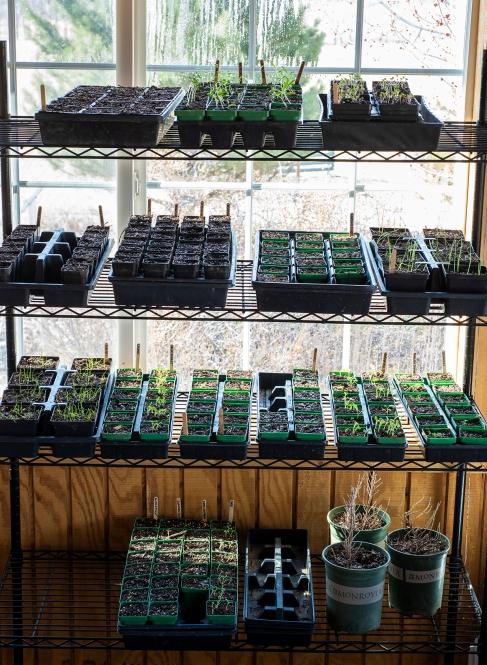 Seedling 02 sml