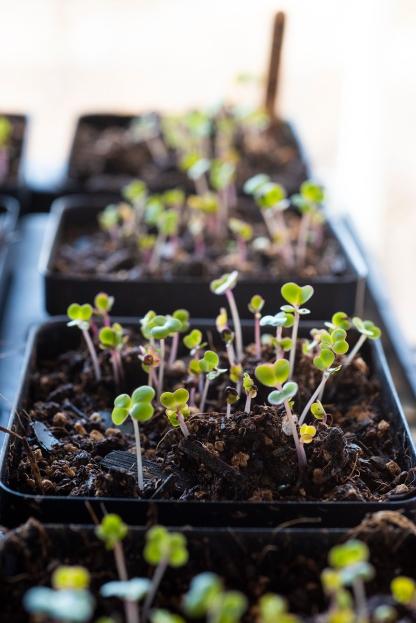 Seedling 03 sml