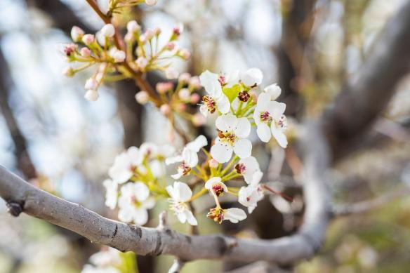 Blossom 01 sml