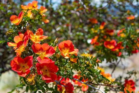 Flowers 03 sml