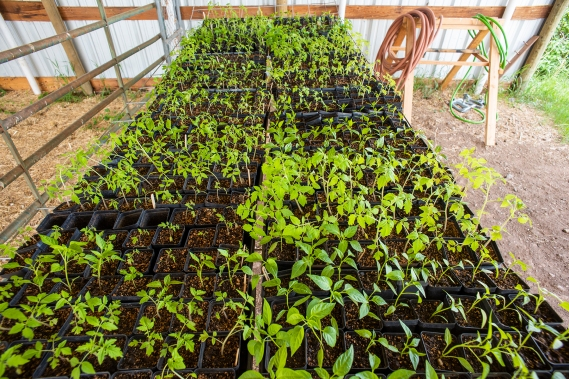 Plant Starts 01 sml