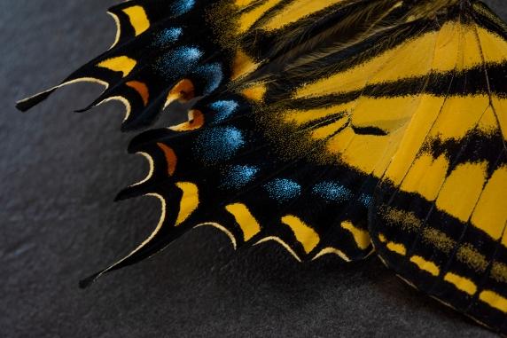 Butterfly 01 sml