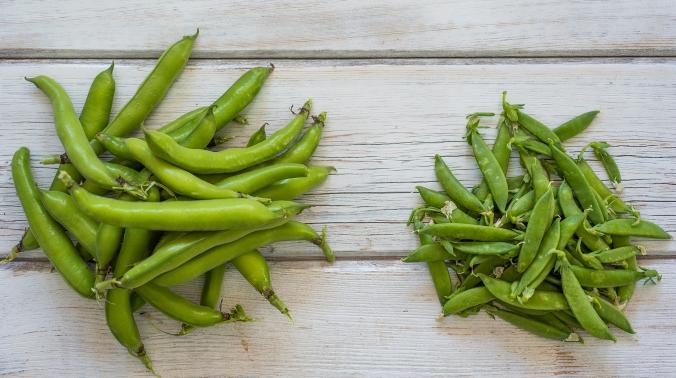 Fava Beans 01 sml