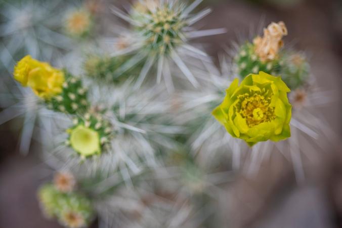 Cactus 01 sml