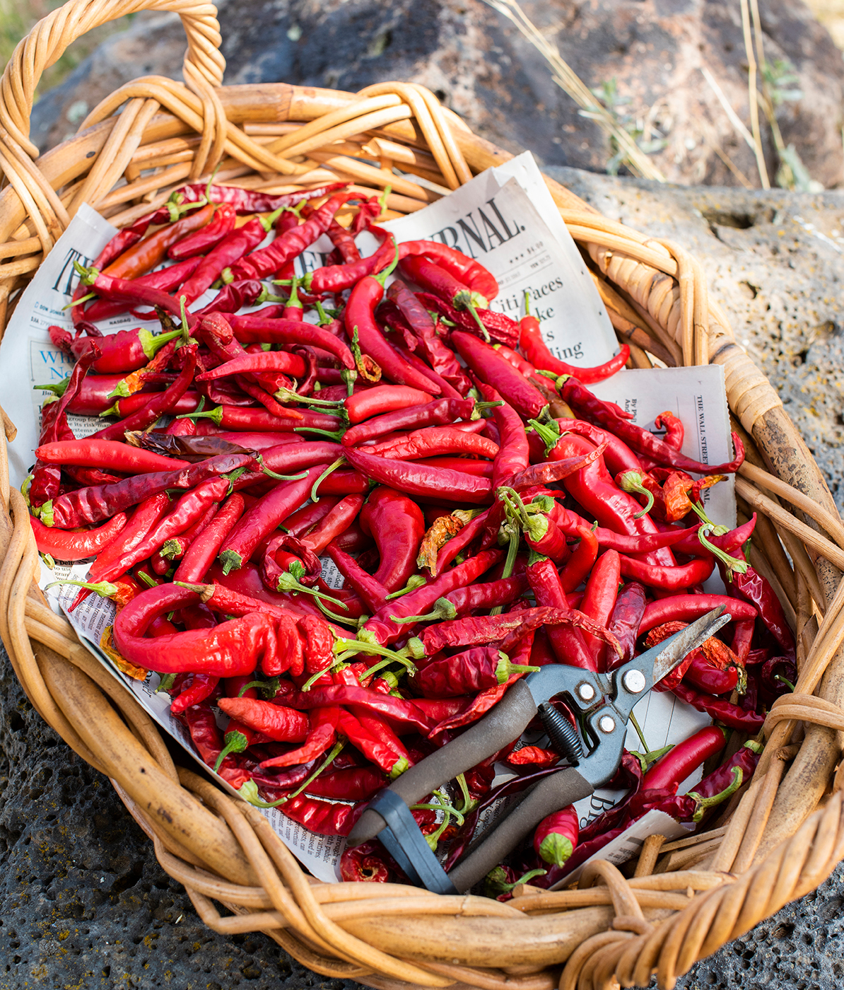 Hot Peppers 01 sml
