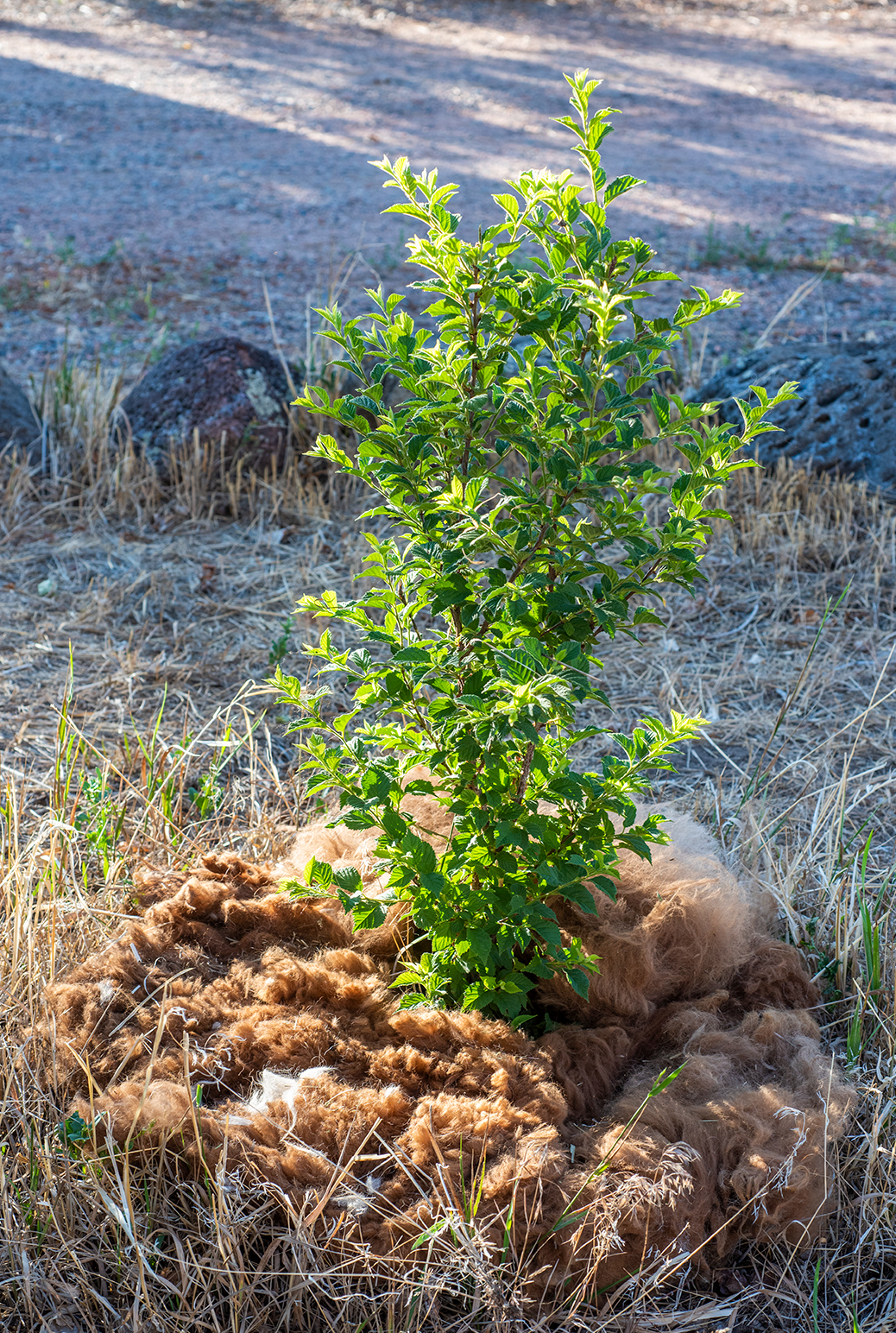 Tree Mulch 01 sml
